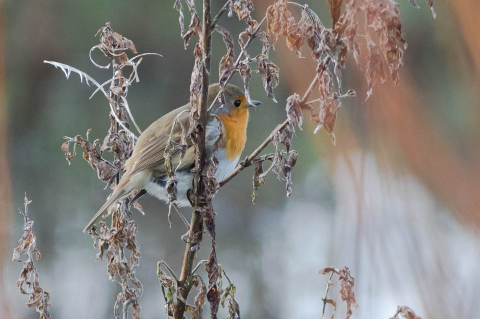 Vogels op de Oerfloed