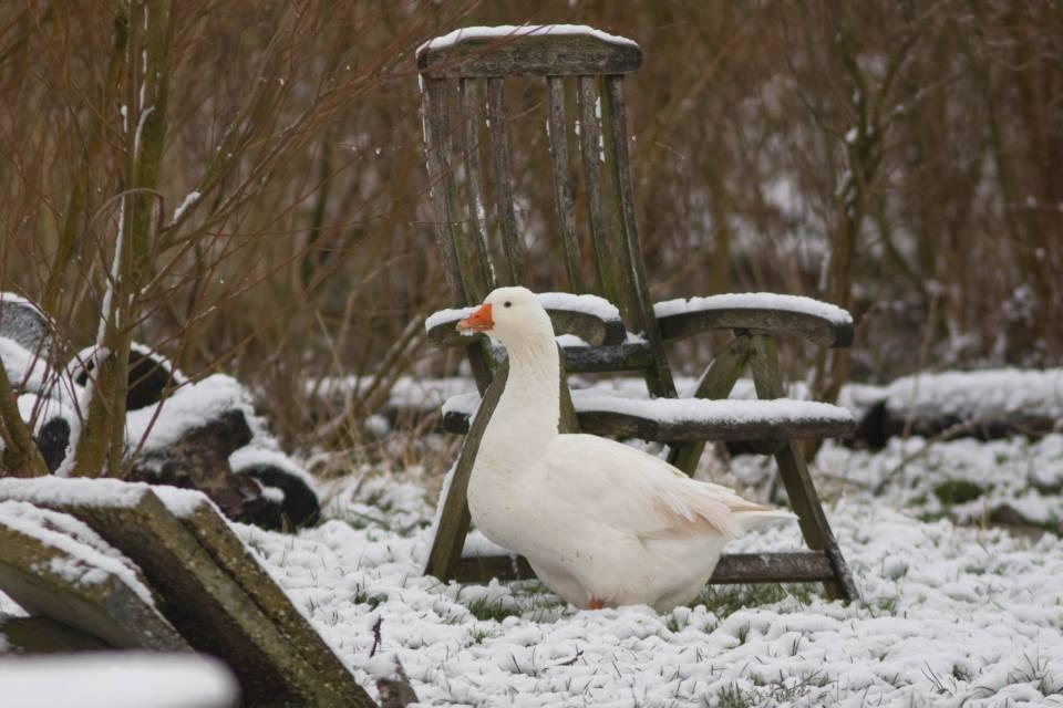 Winter op de Oerfloed